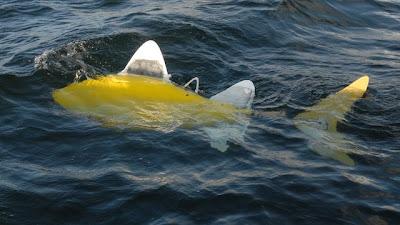 Robofish, Robot Ikan Untuk Deteksi Polusi [ www.BlogApaAja.com ]