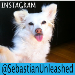 NEW! Sebastian's Own Instagram