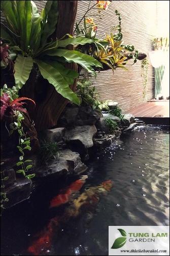 hồ cá koi nhiệt đới, hồ cá koi mini đẹp
