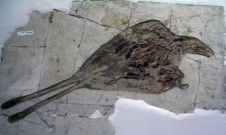 Prehistoric Birds Still Alive Some fossils even preservedPrehistoric Birds Still Alive