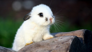 Cute Rabbit Wallpaper