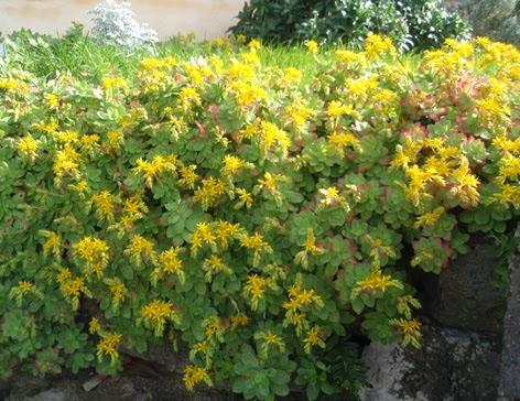 Color en el jard n todo el a o plantas que florecen en febrero for Plantas para rocallas