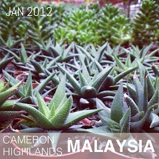 Cameron Highlands (Jan 2012)
