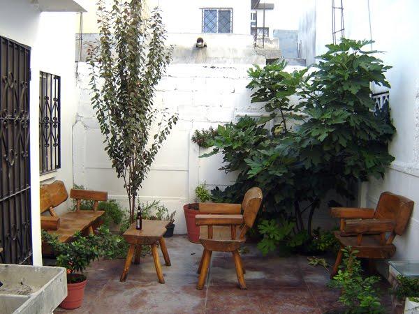 G u f f o c a b a l l e r o se extra an los rboles - Como decorar mi patio ...