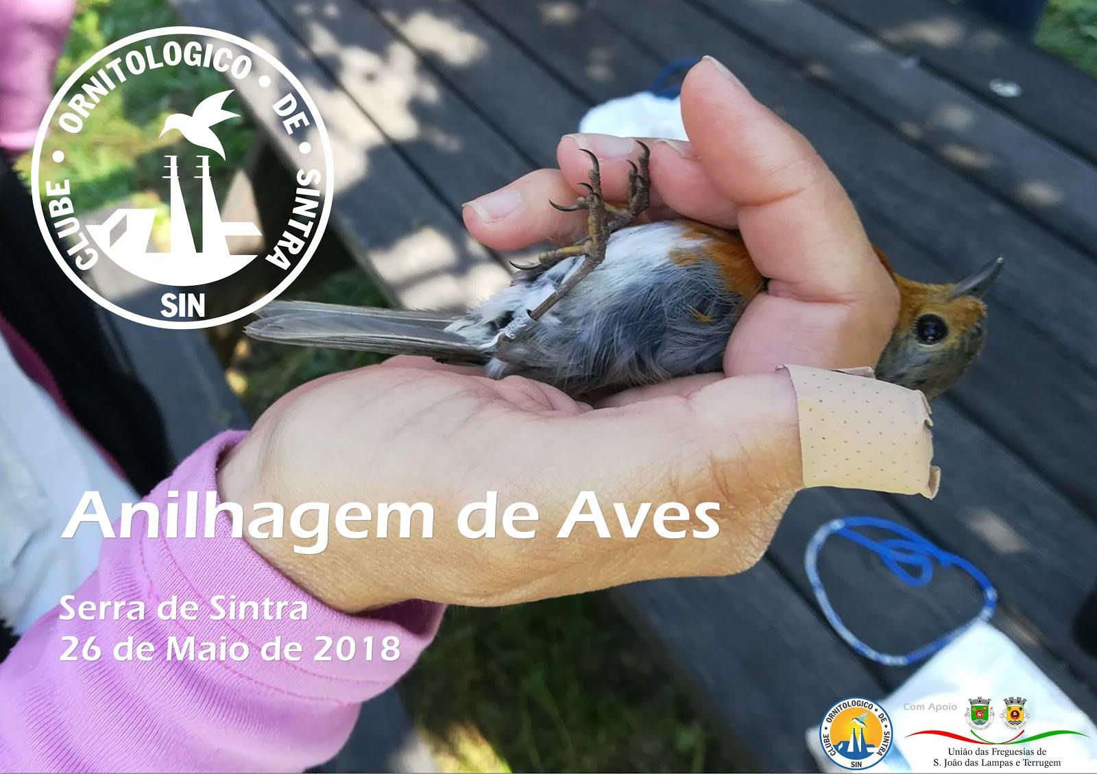 Anilhagem de Aves 2018