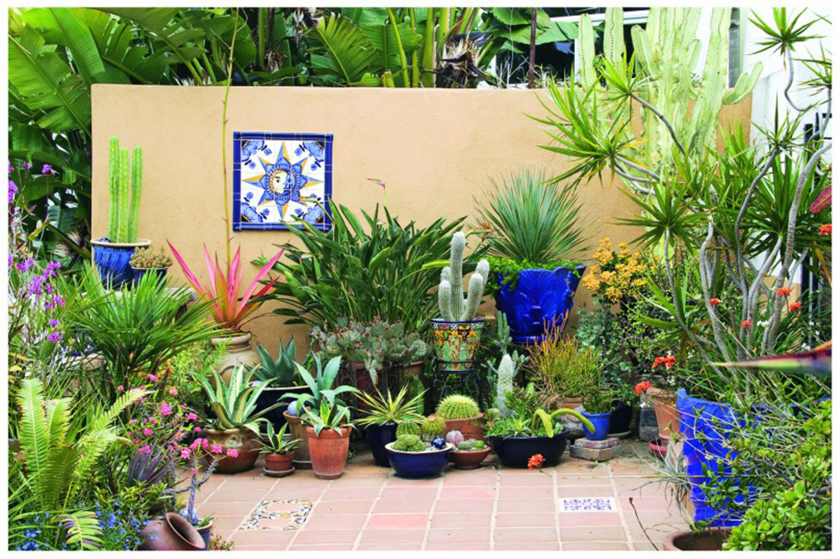 Succulents Plants Sydney