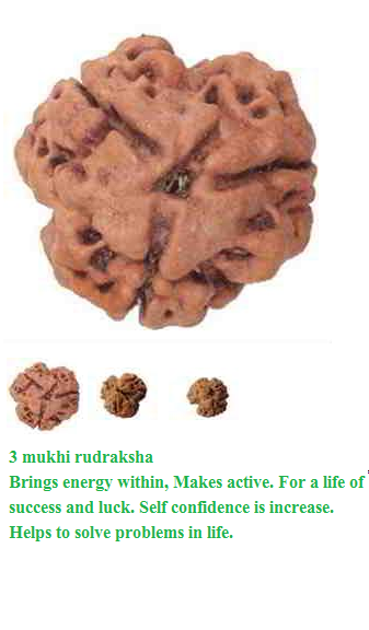Power of Teen 3 Mukhi Rudraksha Effects