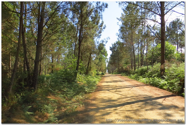 kilómetros de pista forestal