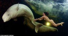 Beluga Whale Extraordinaire