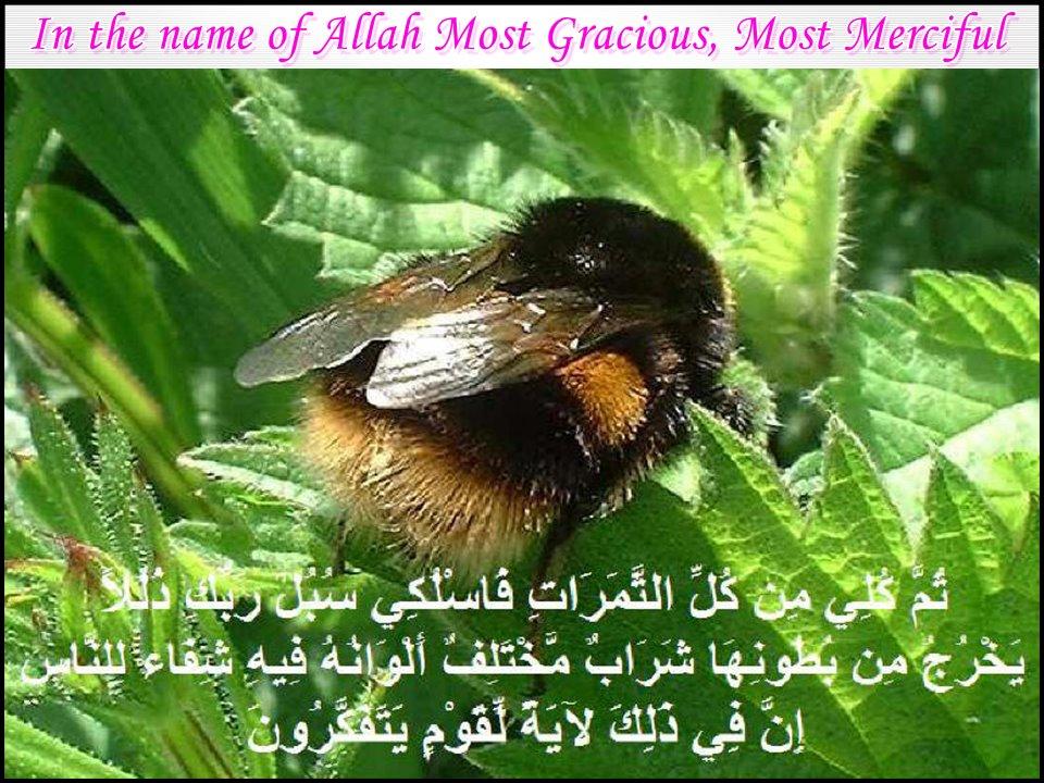 muhammadabuzar-islambl...