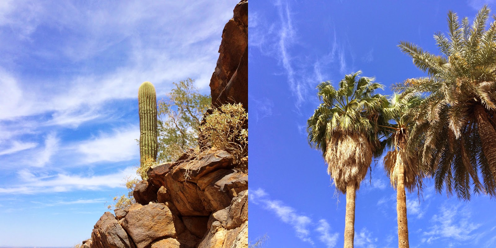 the palms at south mountain
