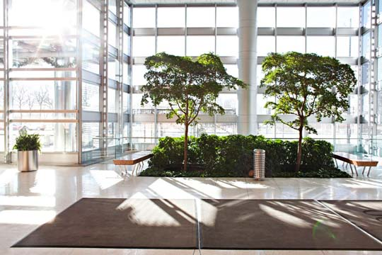 Beautiful Interior Office Plants From Phillips