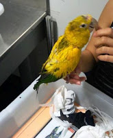 Bird freed from sock.