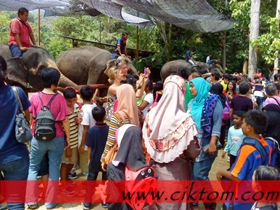 Pertunjukan gajah yang lincah dan jinak pukul 2 petang