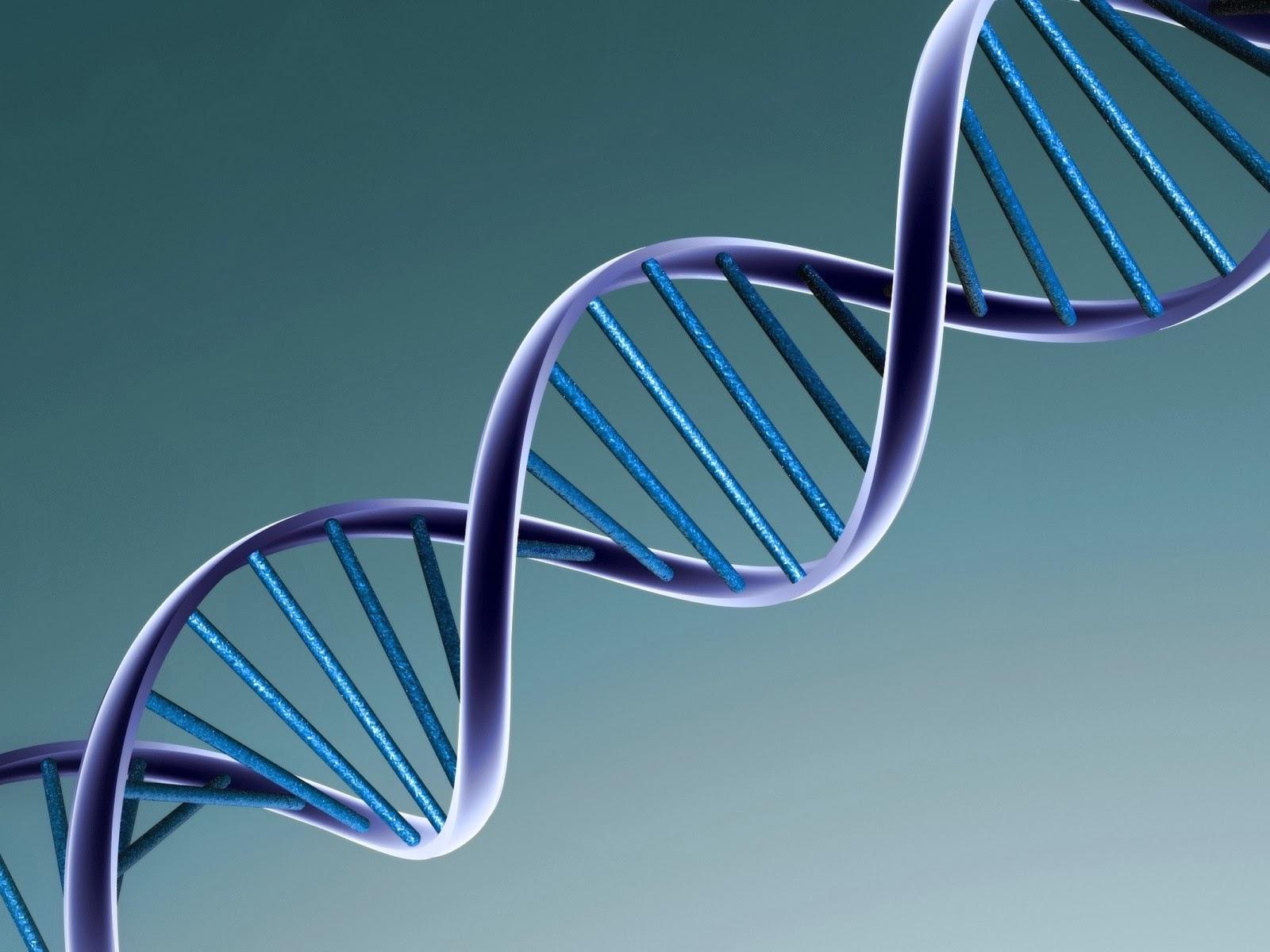 Gen Mcl-1 futuros tratamientos lupus. Revista infolupus