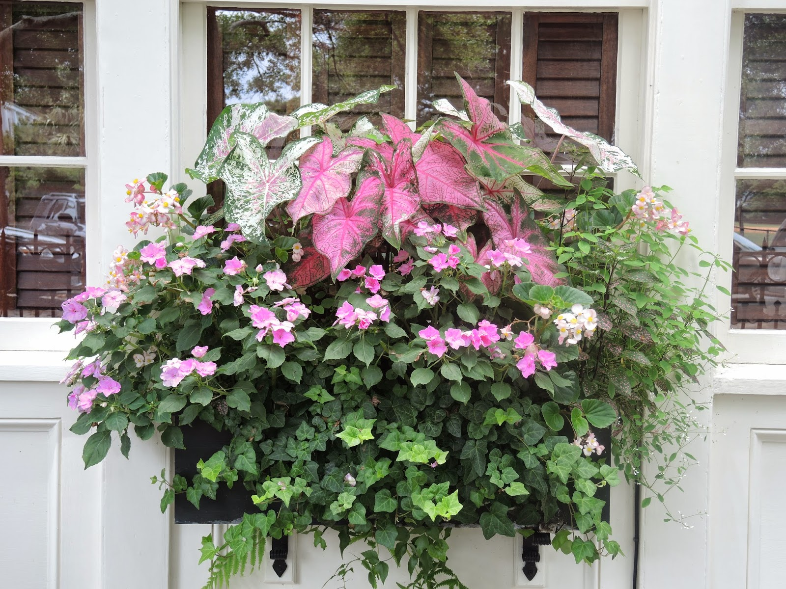 southern warm climate window box easy planting