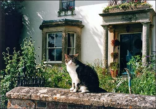 Cat from Avebury, Ireland
