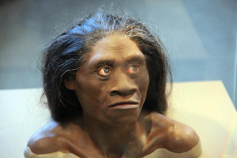 Gambar Manusia Purba - Homo Floresiensis
