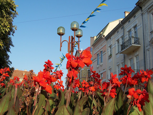 Flowers beauty, Ternopil, Ukraine