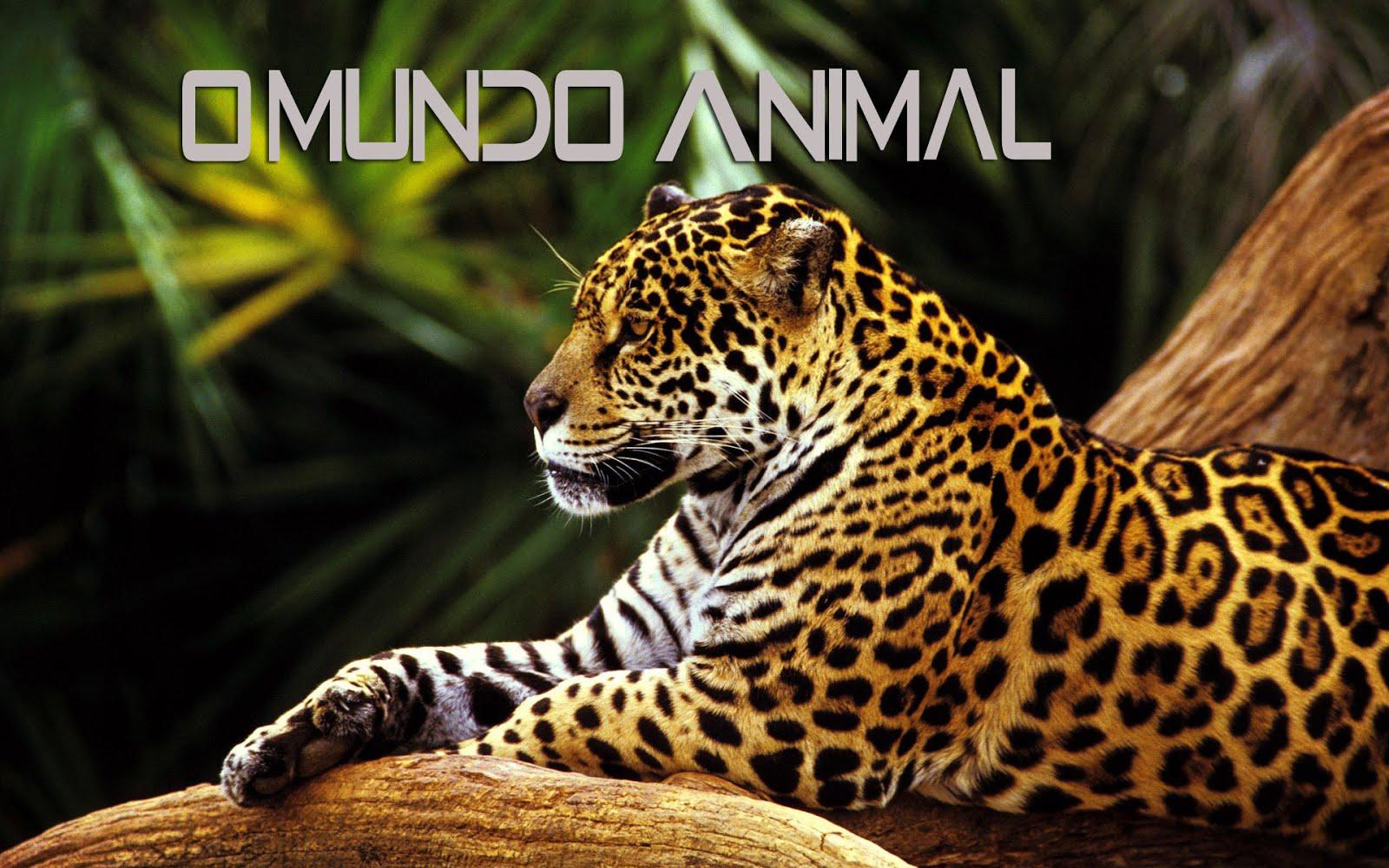 O Mundo Animal