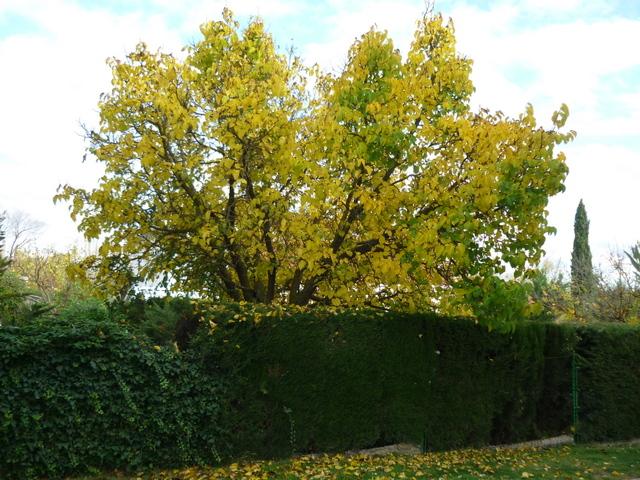 árboles otoño