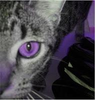 The Purple Kattery Logo