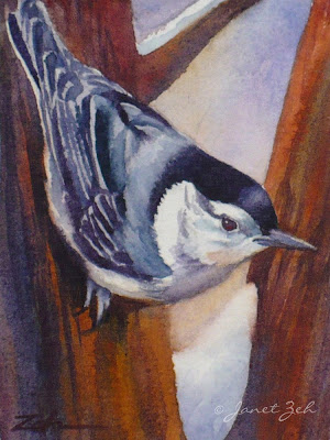 A nuthatch in winter