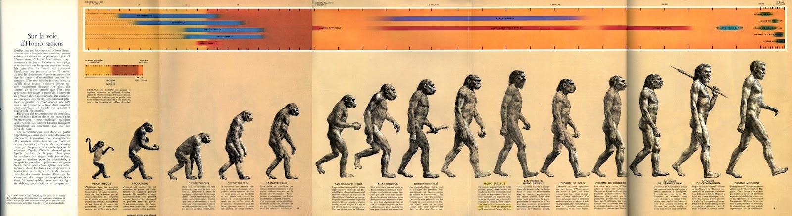 NOE - Page 8 Art0_evol+full