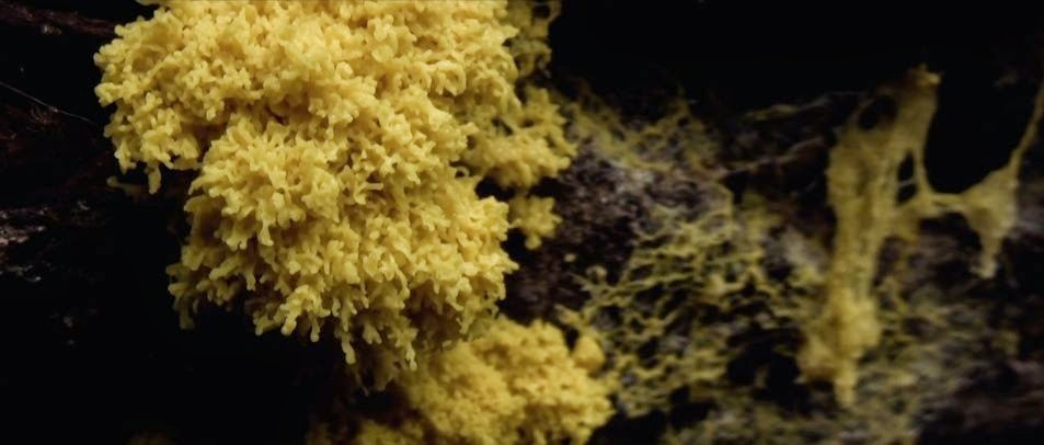 Slime Mold Colony Intelligence Explored In New Documentary 'The Creeping Garden'