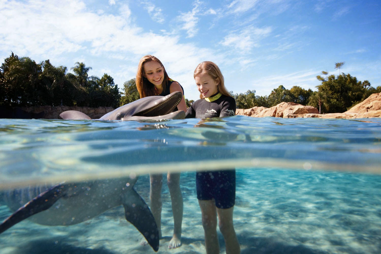 Nadando com golfinhos no parque Discovery Cove em Orlando