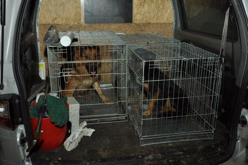 Dogs, in, Sarajevo, horror, house, saved