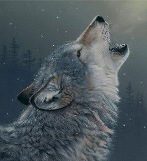 Inilah Alasan Mengapa Serigala Melolong