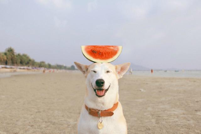 Gluta, the jolly dog