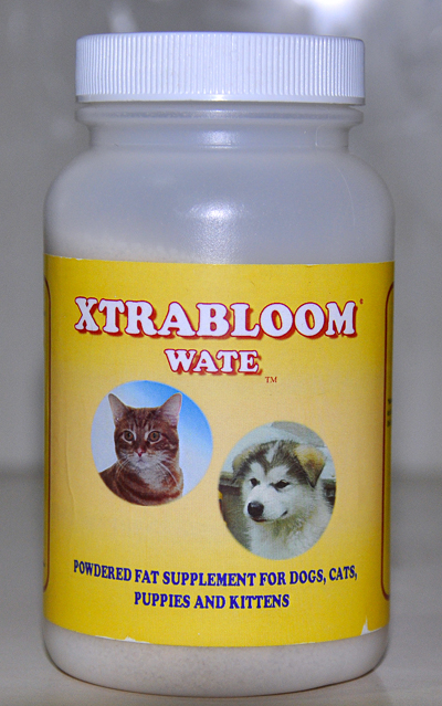 Makanan Kucing Baru yang dapat Mengurangi Bau Kotoran Kucing