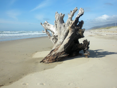 photo of driftwood on bay ocean spit
