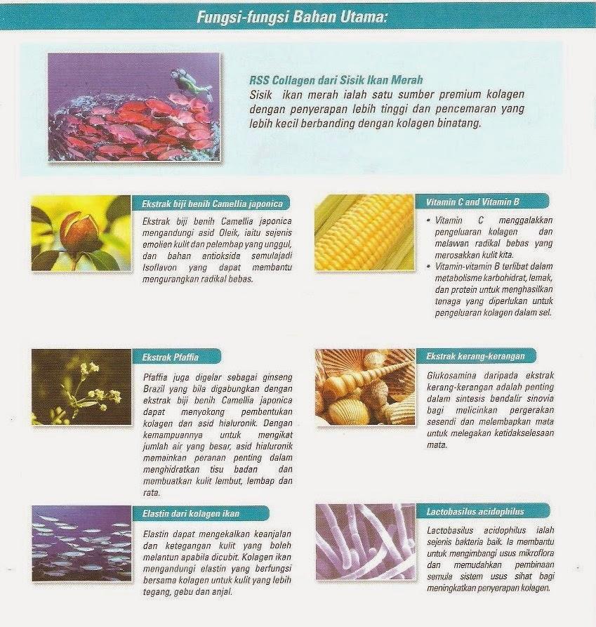 Fungsi bahan utama di dalam Shaklee Collagen Powder