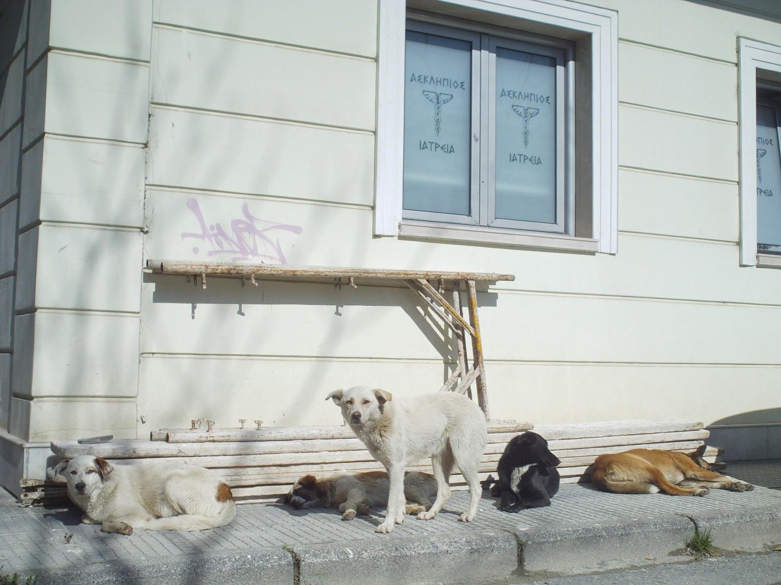 αδέσποτα σκυλιά στην Έδεσσα