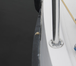 Wee yellow frog hitchhiked all the way across Lake Okeechobee. Slept under the fender enroute.