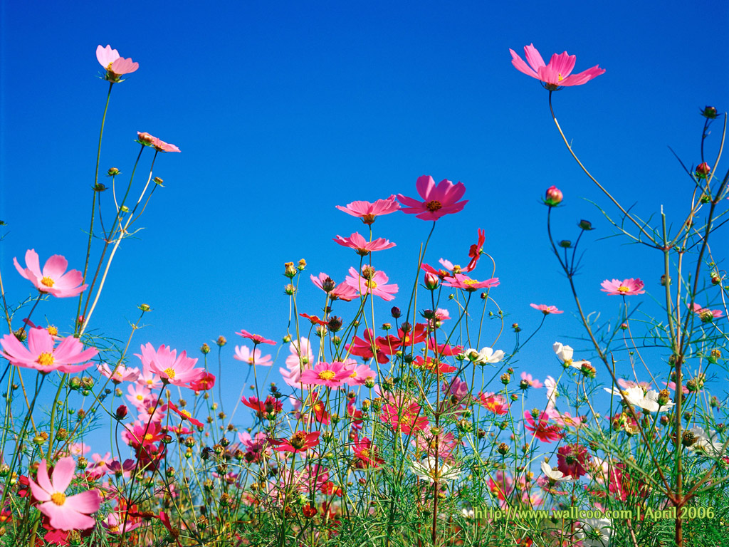 spring flowers wallpapers - photo #34