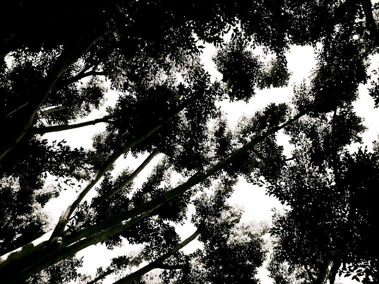 Rorschach Forest