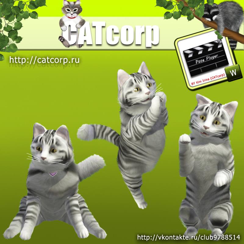 Мастерская CATcorp Catspose1