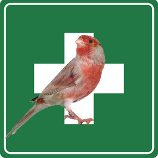obat-obatan+kenari.jpg