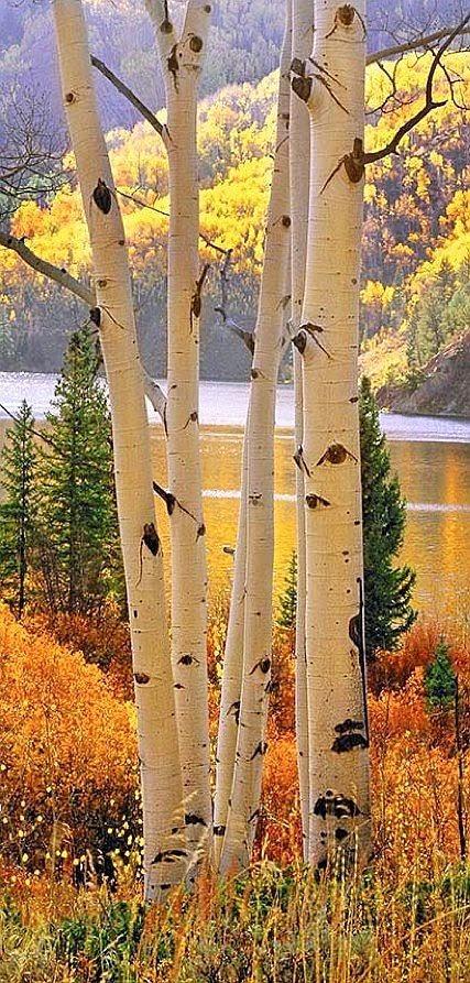 Aspens, Cataract Lake, Silverthrone, Colorado