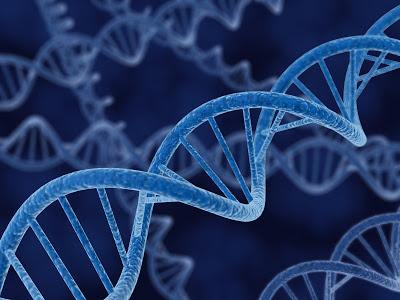 Los dioses extraterrestres eran ingenieros genéticos