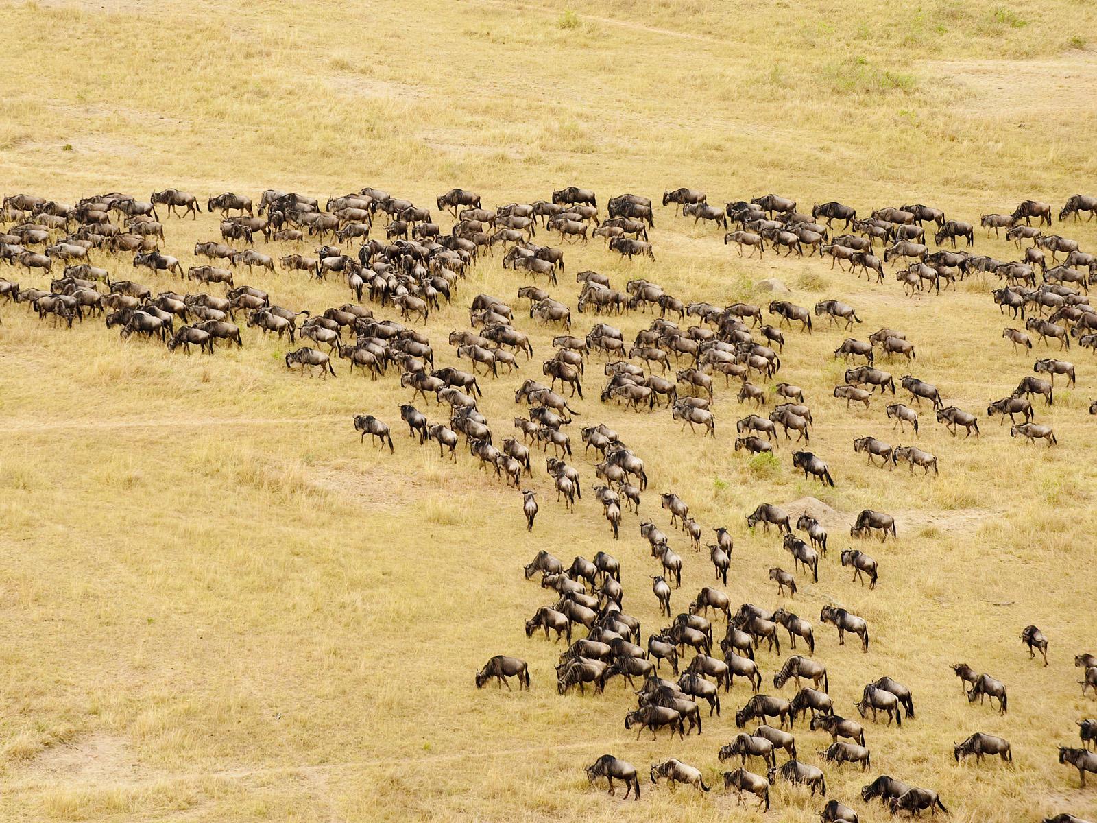 3 Days Masai Mara Migration Tour in 2015, Three (3) Days Masai ...