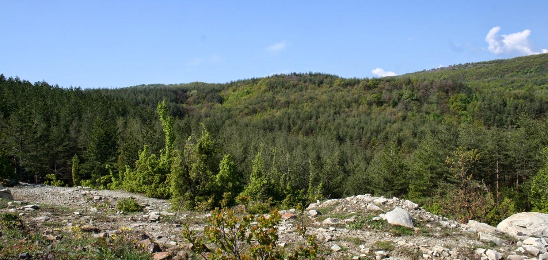 Heavily wooded hillsides