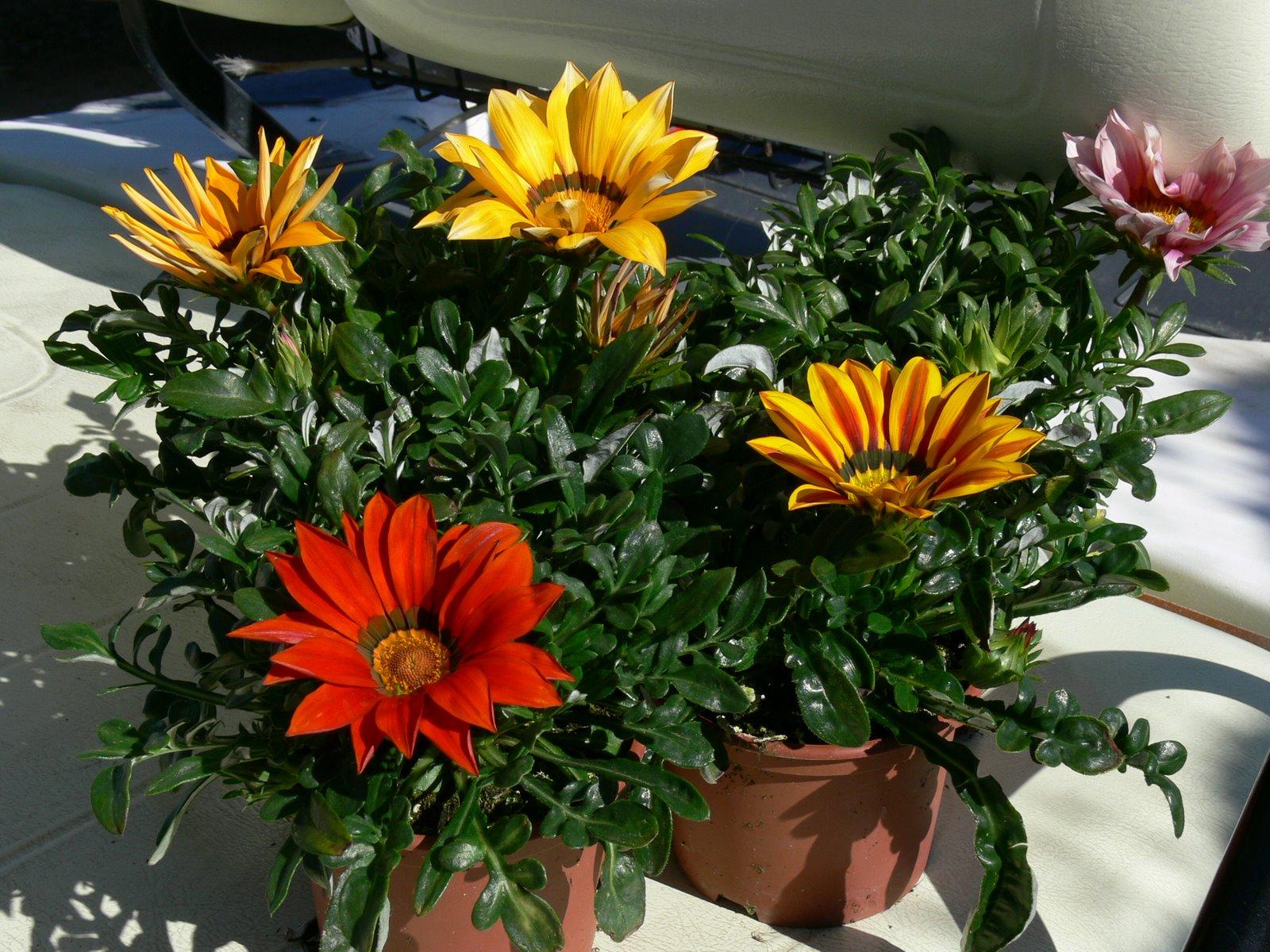 Simplyfiesta ideas f ciles para peque as fiestas - Plantas para terrazas ...