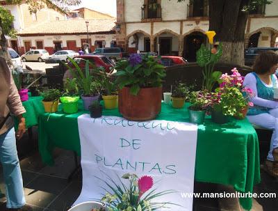 Trueque de Plantas en Pátzcuaro en la Plaza Vasco de Quiroga