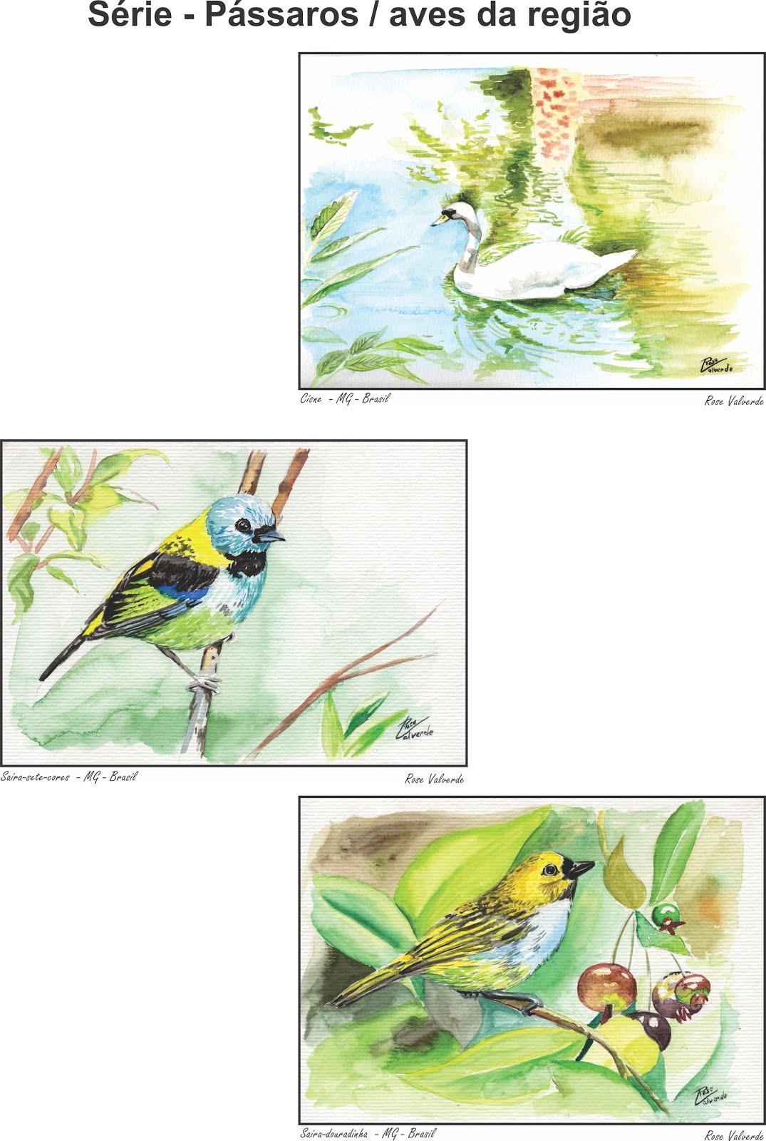 Camisas em transfer - aquarelas de pássaros da região - Rose Valverde