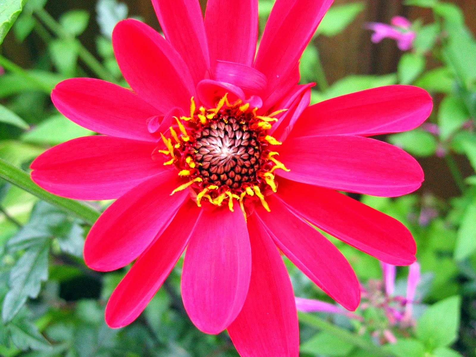 Romantic Flowers: Red Flowers